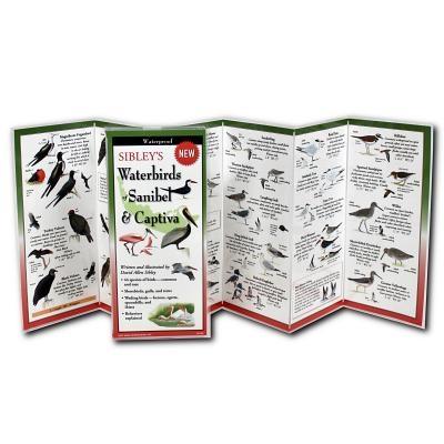 Sibley's Waterbirds of Sanibel & Captiva